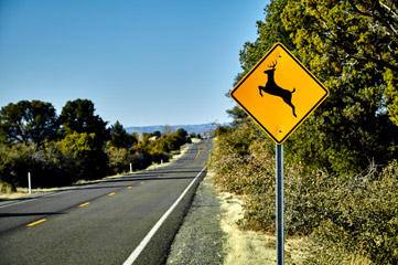 Deer crossing road sign